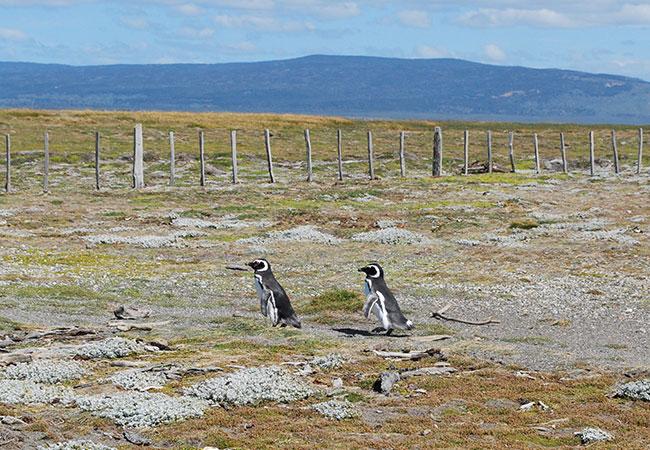 La-Pingüinera-de-Otway-y-su-paisaje