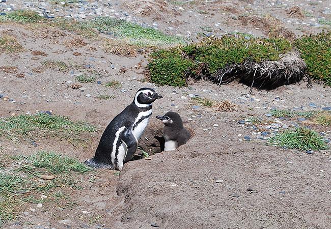 La-Pingüinera-de-Otway