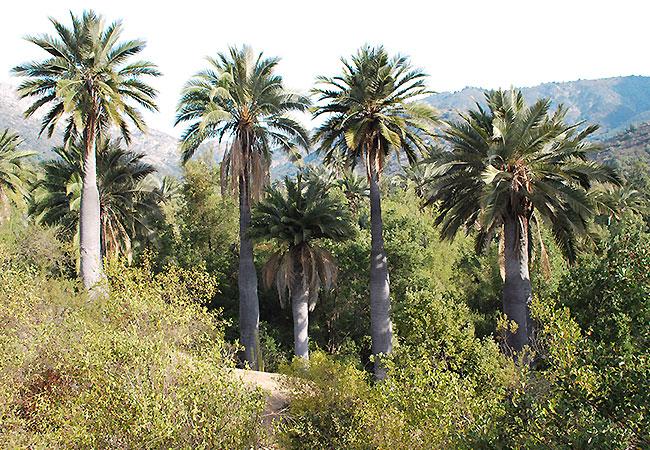 Parque-Nacional-La-Campana