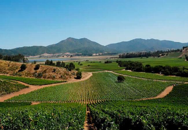 Valle-de-Casa-Blanca-Viñedo-Chile