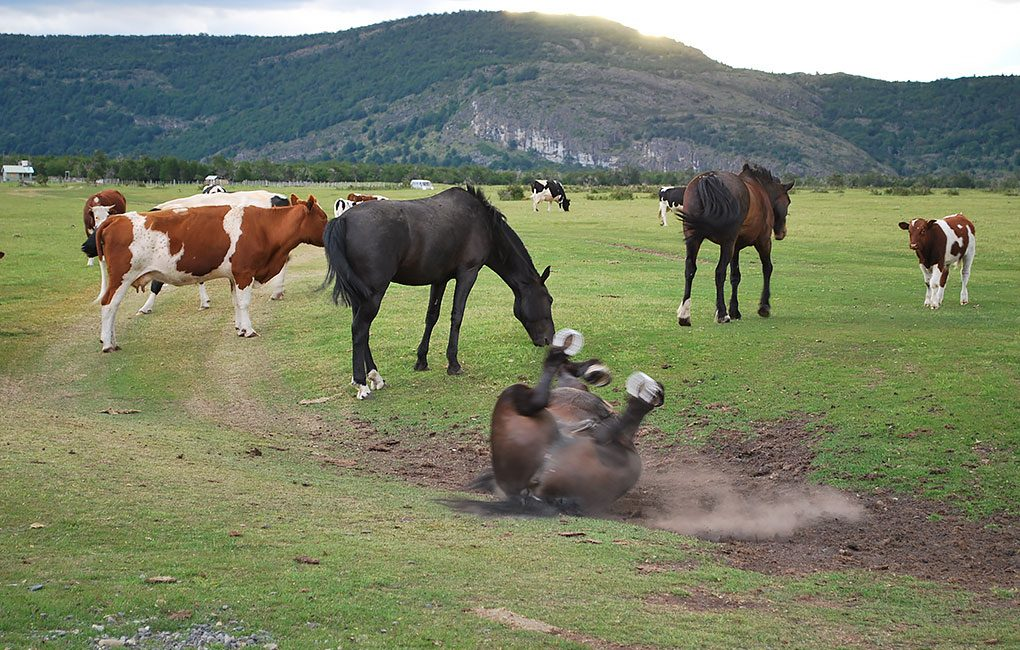 Caballos-en-Torres-del-Paine