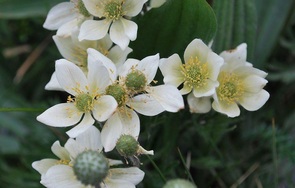 Flora-en-Torres-del-Paine