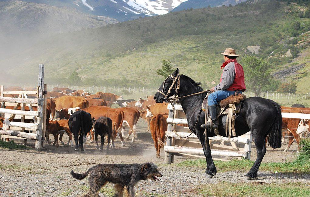 Pastoreo-en-Torres-del-Paine